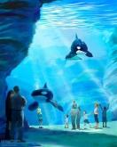 Foto:SeaWorld