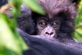 Foto: Verein Endangered