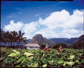 Foto: Kuba Tourism